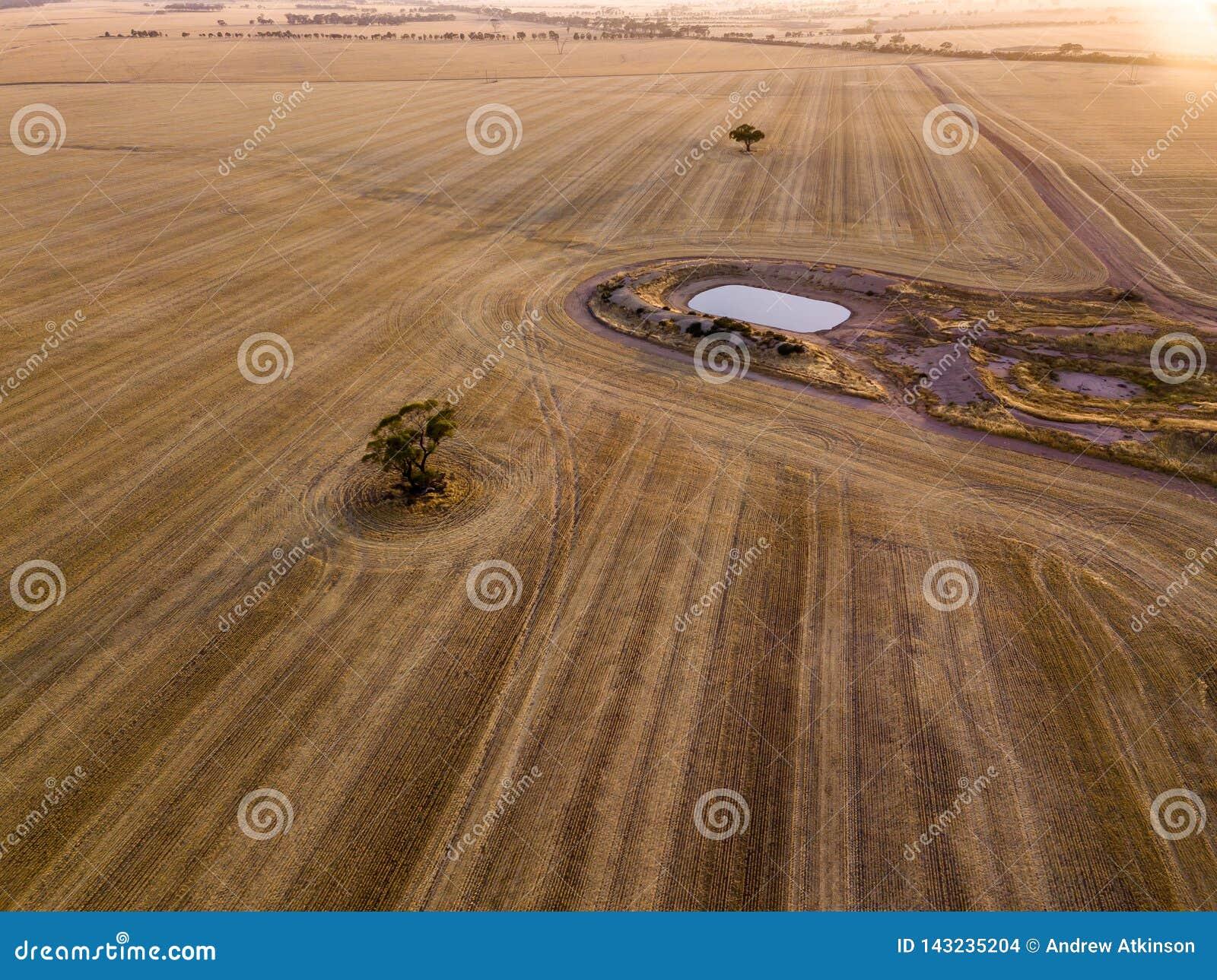 Antenne van droge bruine landbouwgrond en oogstpatronen met boom en dam wordt geschoten die