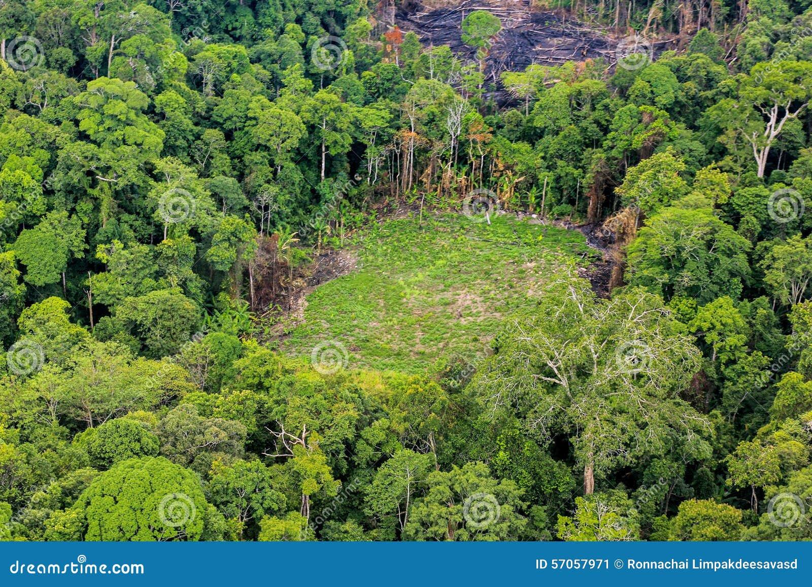 Antenne Von Geschnittenen Baumen Auf Dem Boden Im Regenwald