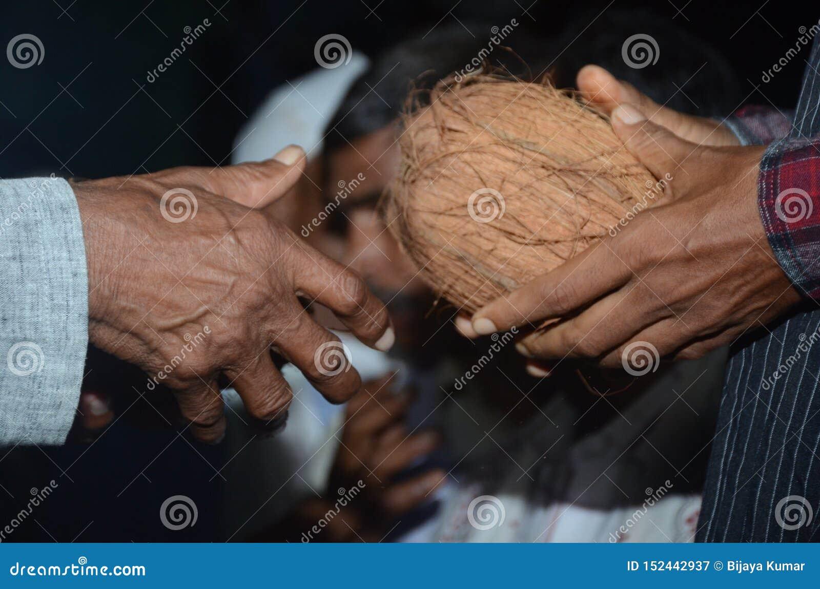 Antes de regla tradicional de alteración para dos personas de los cocos del matrimonio en bodas hindúes