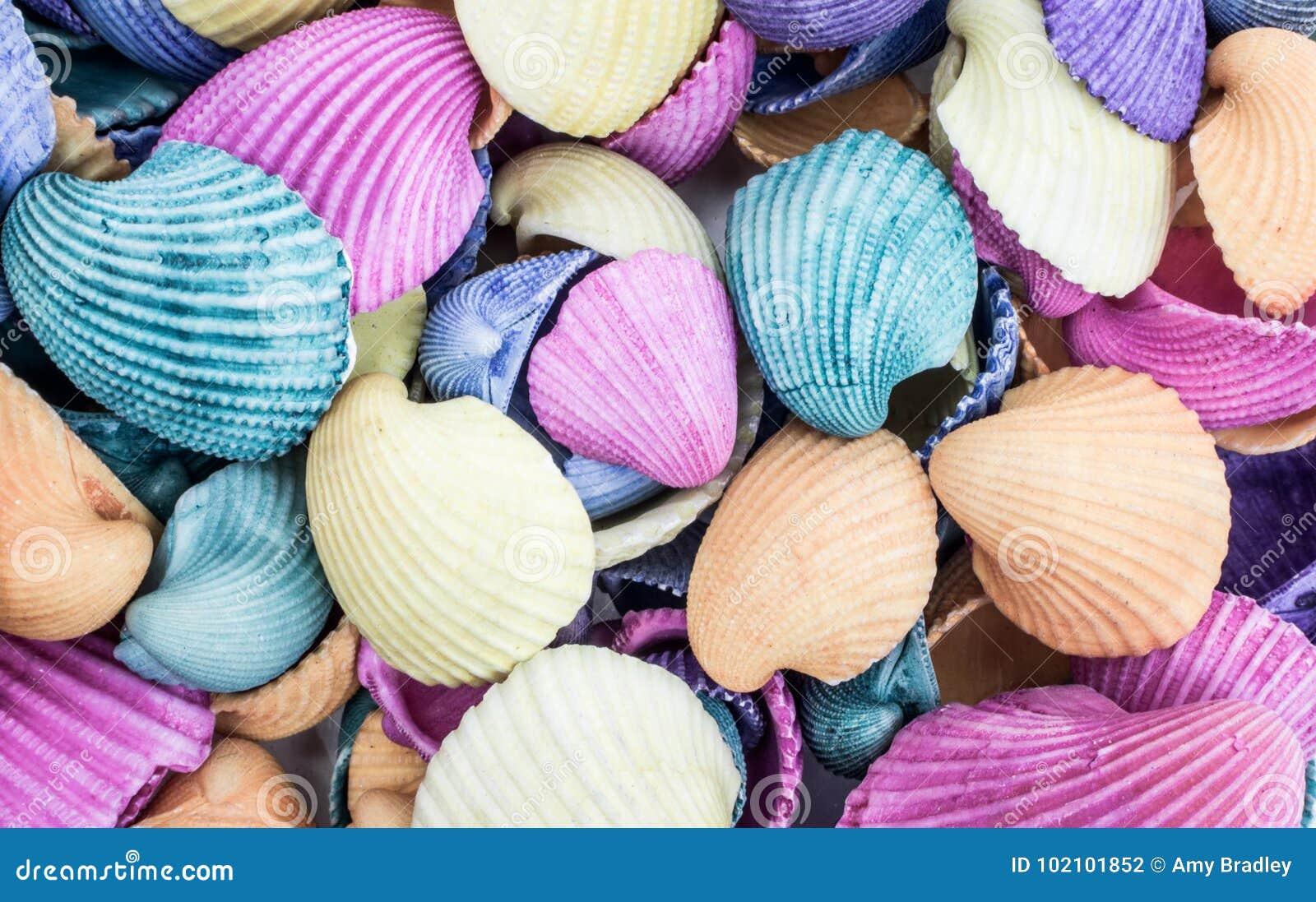 Antiguidade sortido conchas do mar coloridas