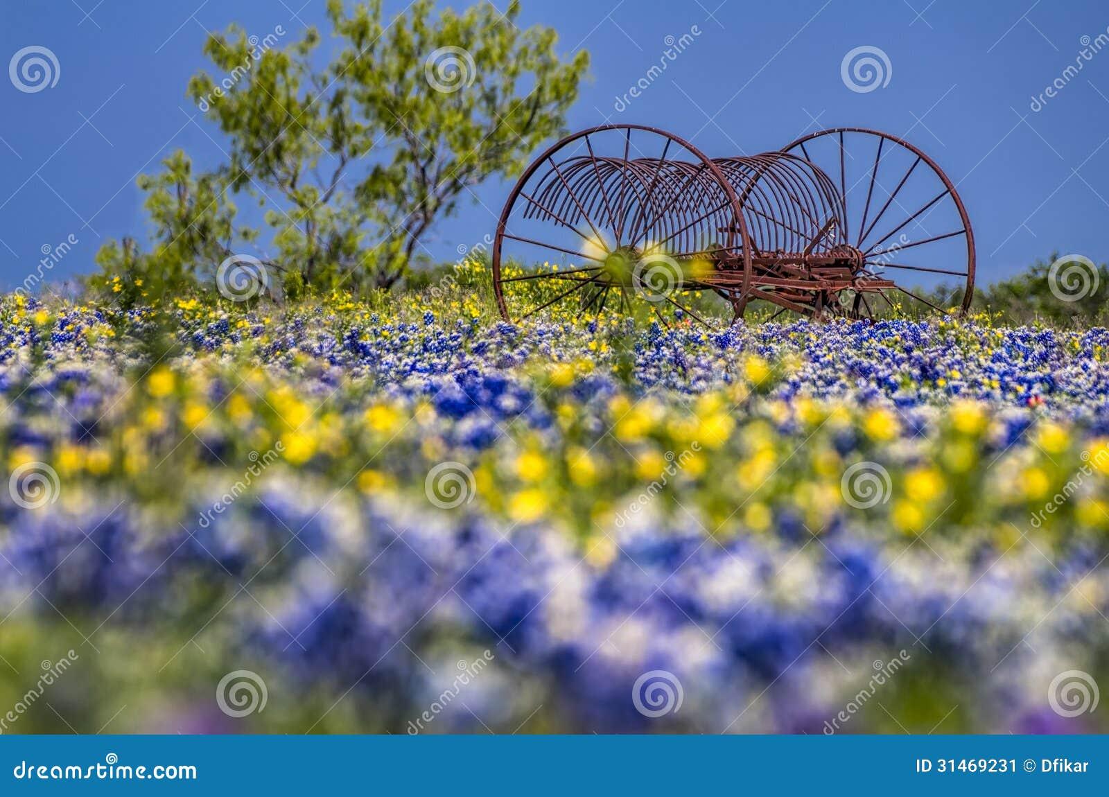 Antike landwirtschaftliche Maschinen auf einem Gebiet von Bluebonnets