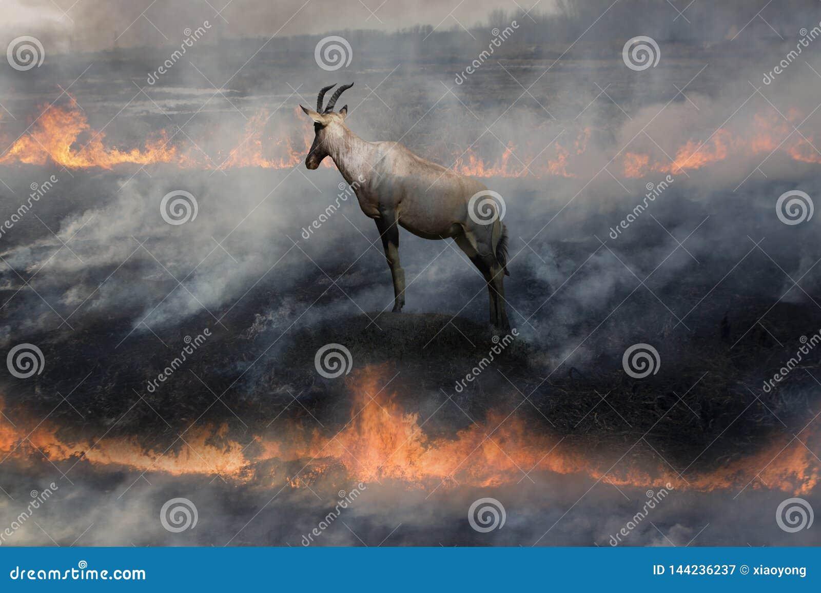 Antilope in brandland