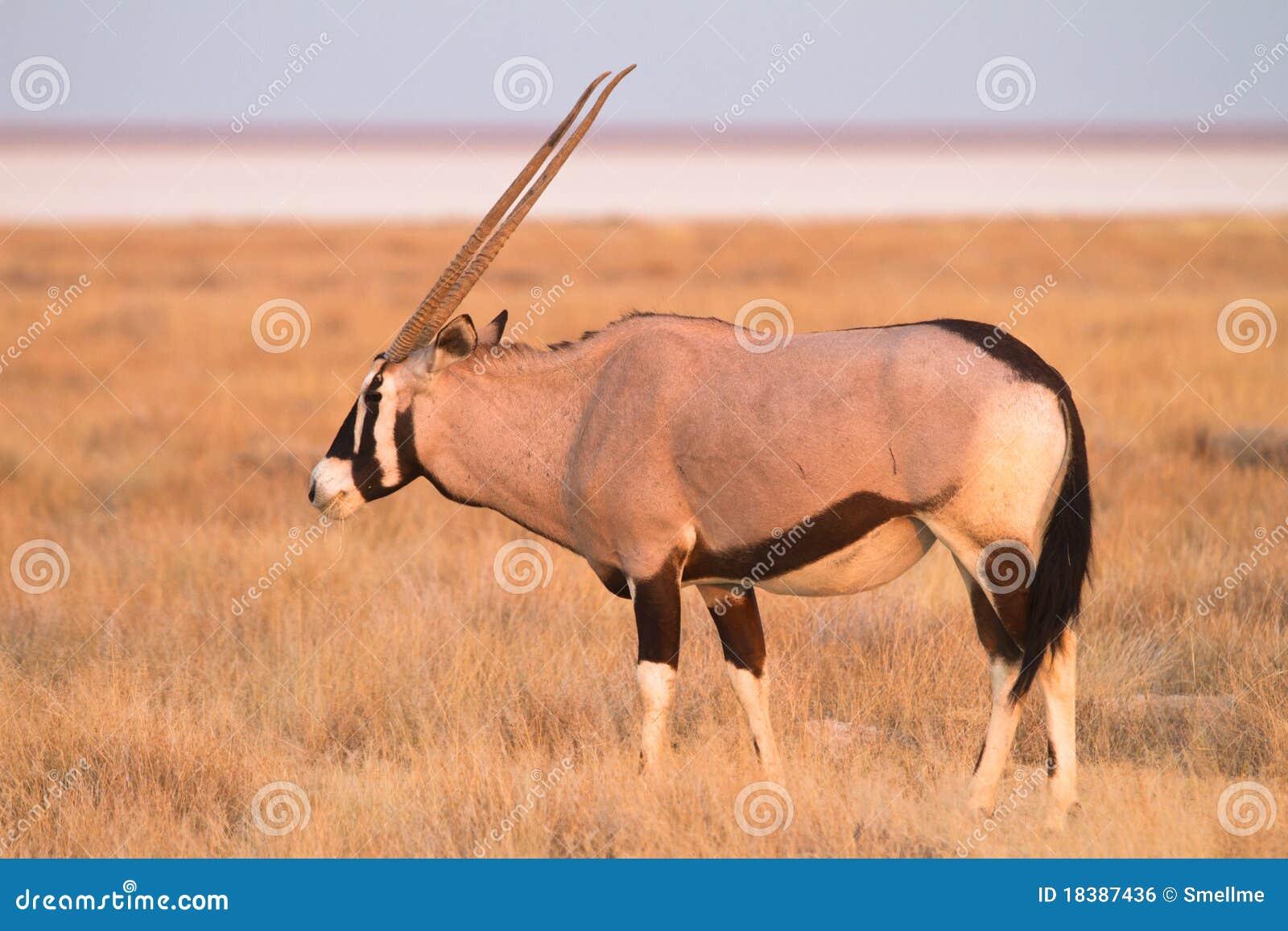 Antilopgemsbok