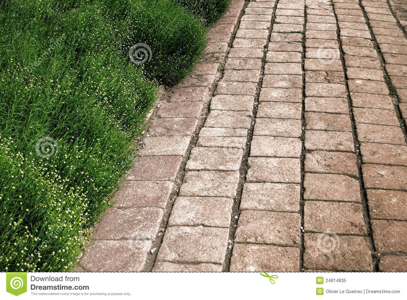 Antique brick pavers alley with green plant hedge stock for Green pavers
