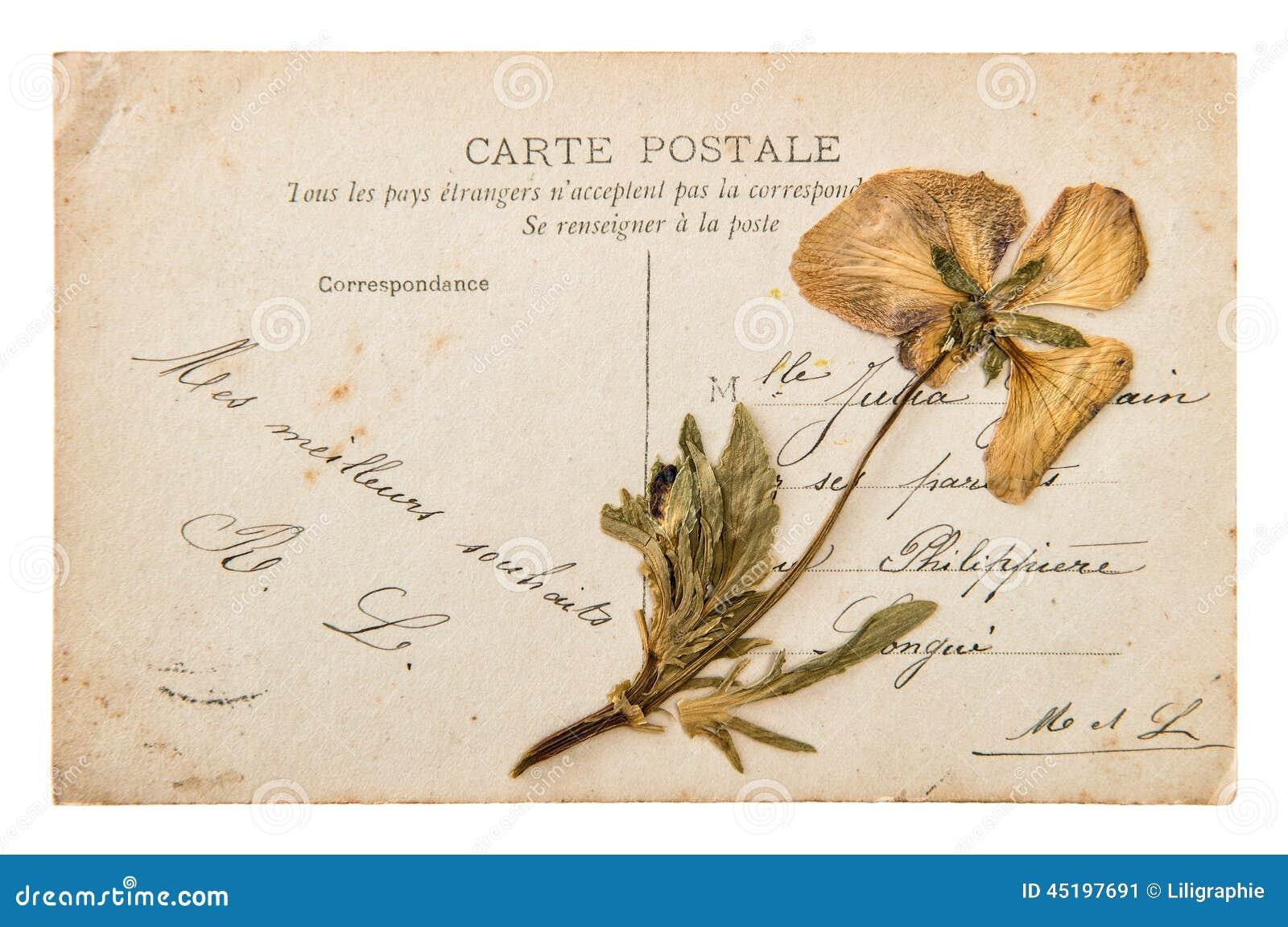 Italian handwritten postcard letter stock photo image 39254147 - Antique French Handwritten Postcard With Dry Pansy Flower 1300x954 Italian Handwritten Postcard Letter Stock