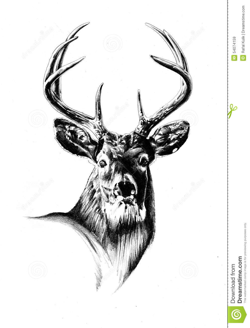 Gallery For gt Stag Drawing
