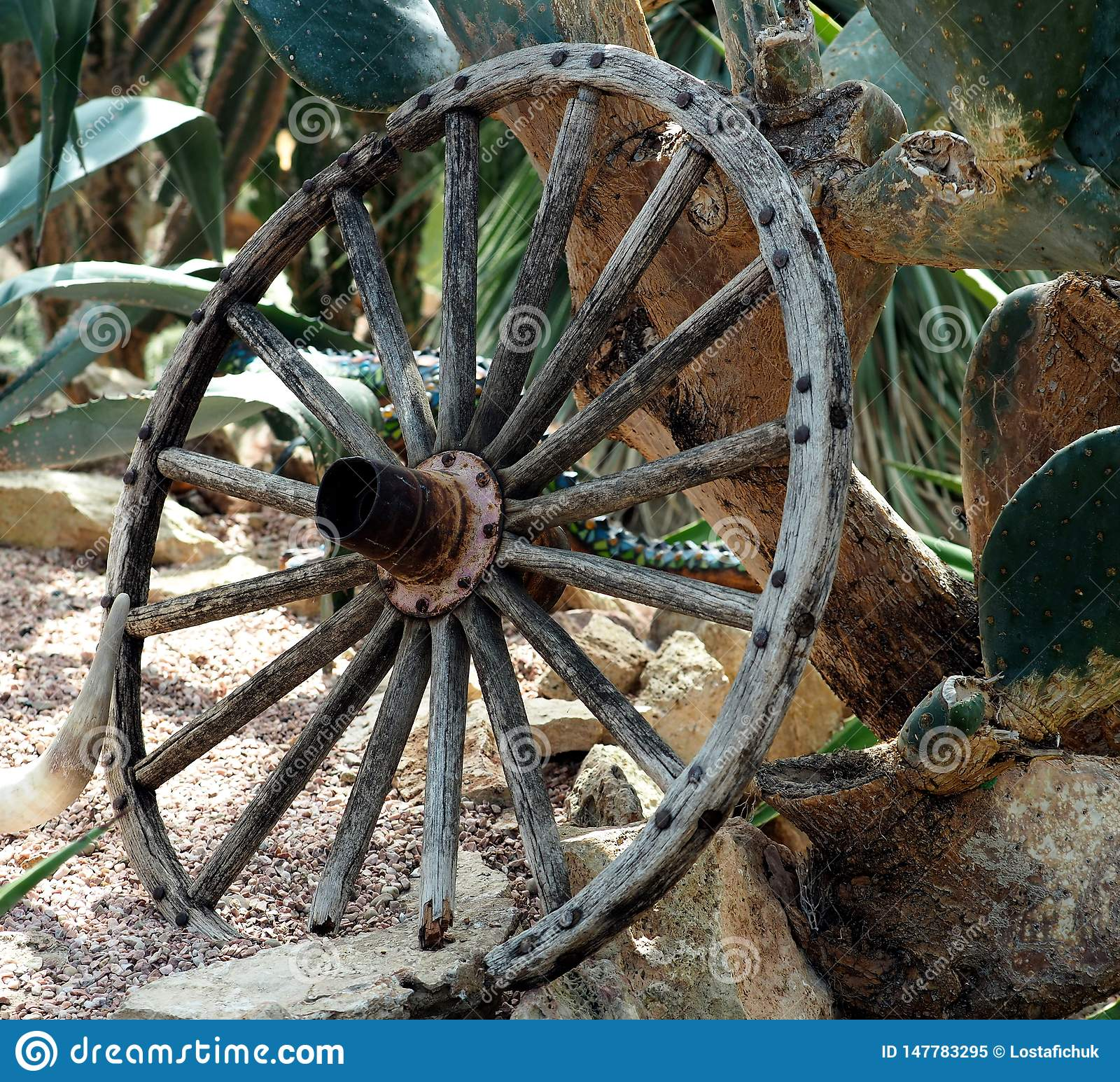 Antique Wooden Wagon Wheel Against Cactus Plant Stock Image Image Of Fashioned Wagon 147783295