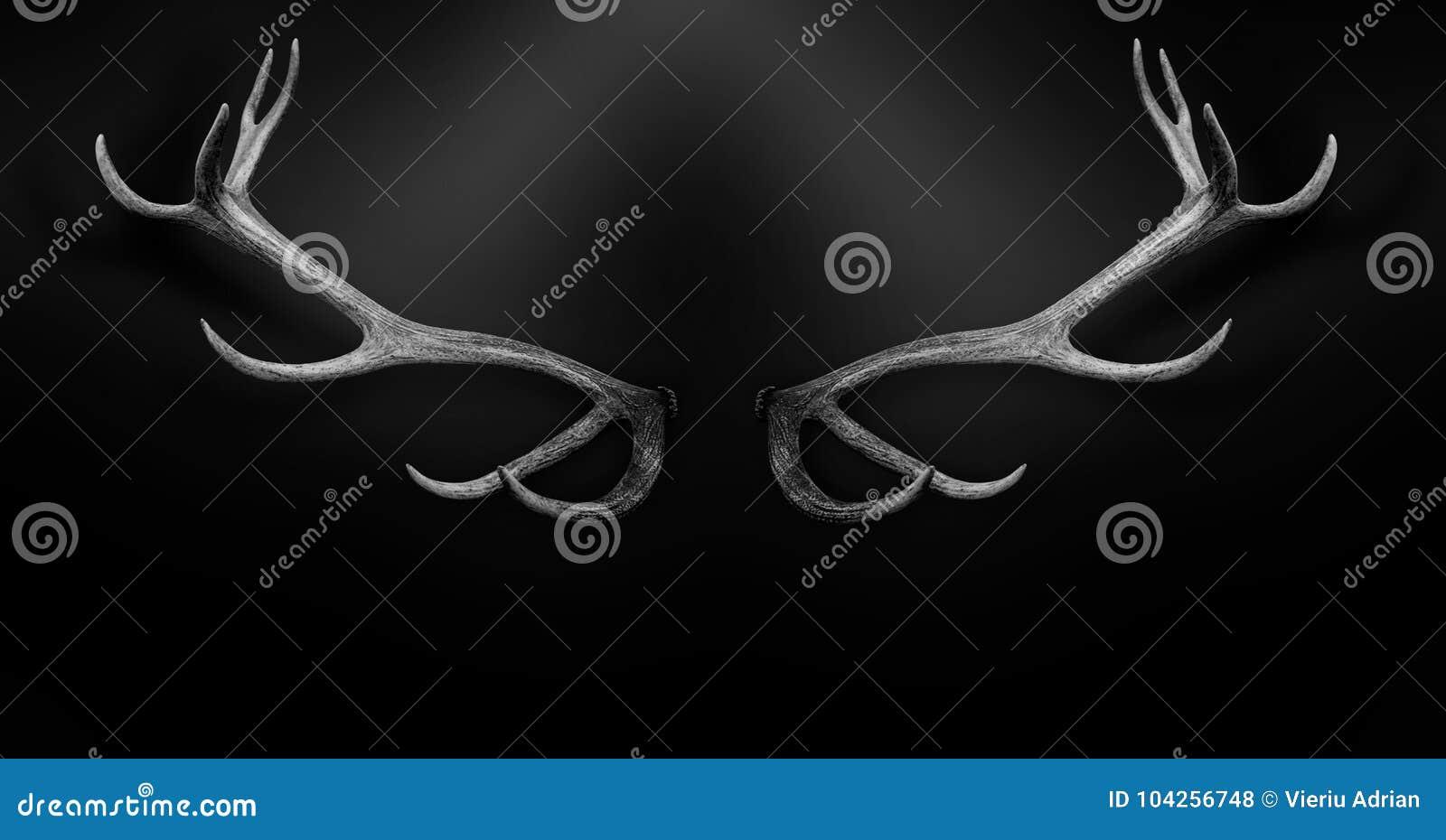 Antlers 3d оленей изолировали черное белое животное предпосылки