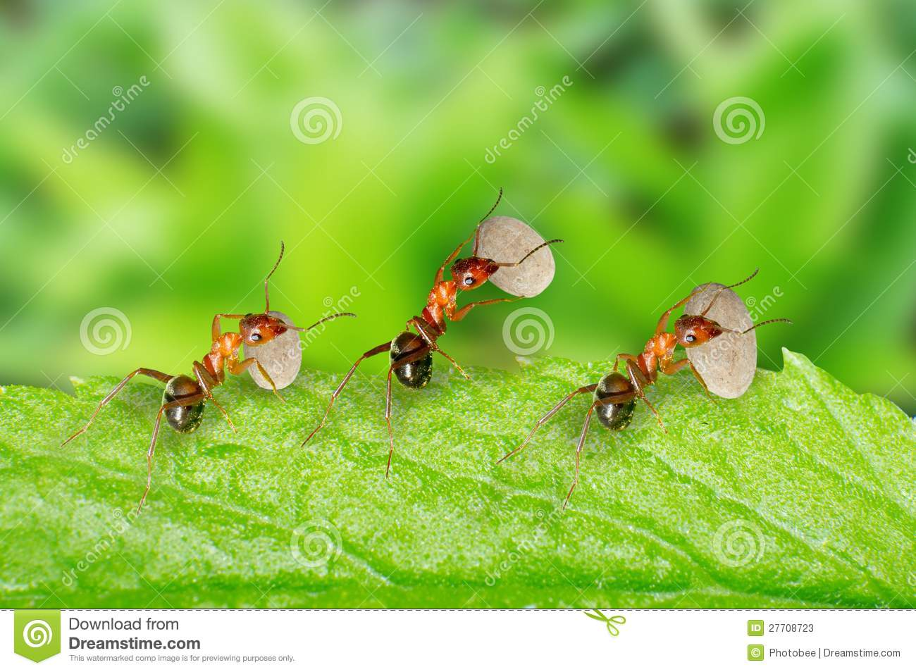 Ants Carrying Food Stock Photos - Image: 27708723