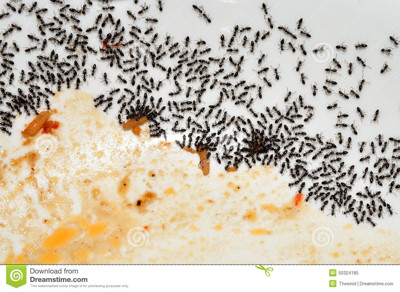 Small Red Ants In Kitchen Ants Exterminator Amp Pest Controlhome Team Pest Defense Small Red