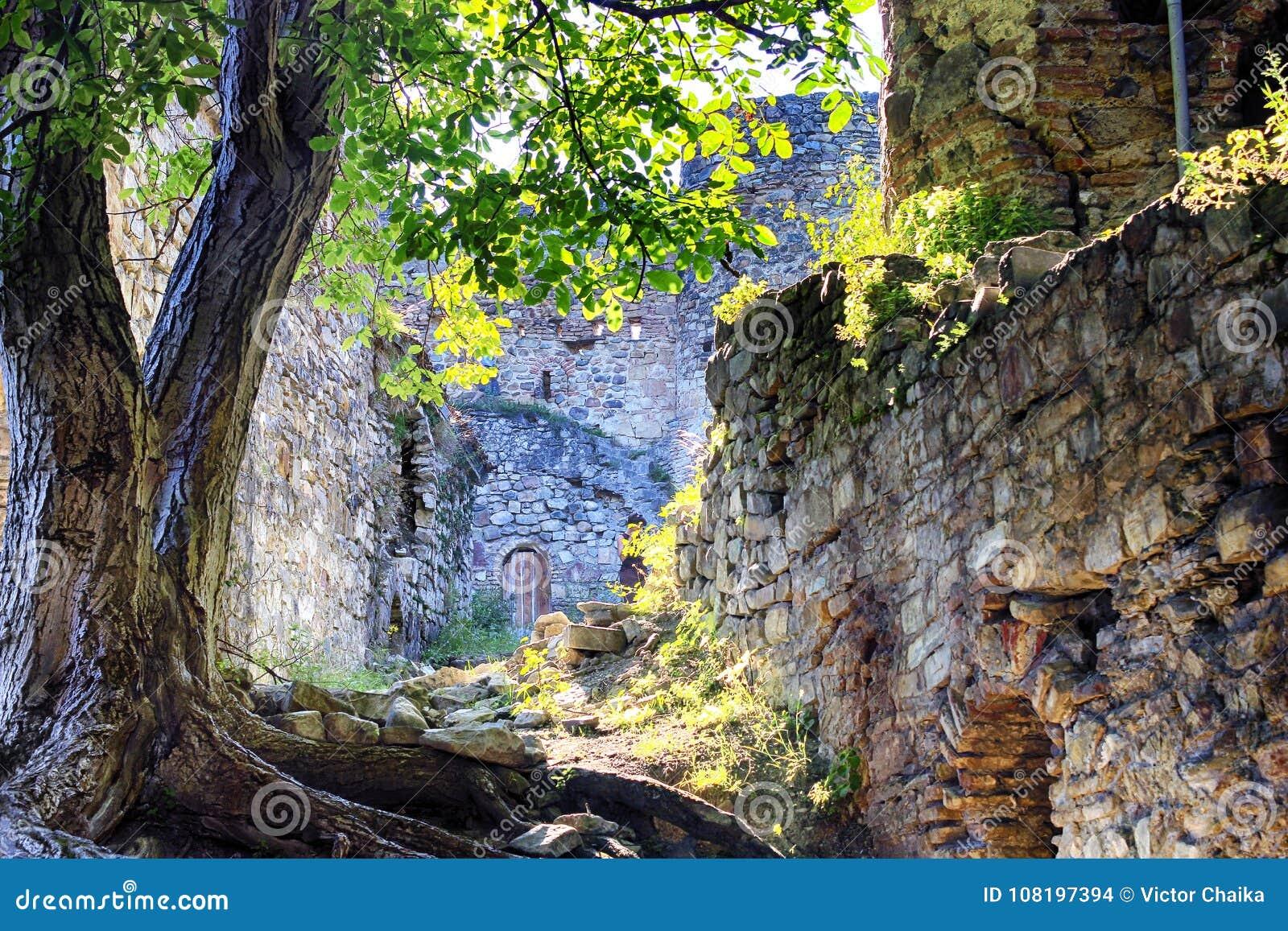 Antyczny grodowy ściana z cegieł z drzewem