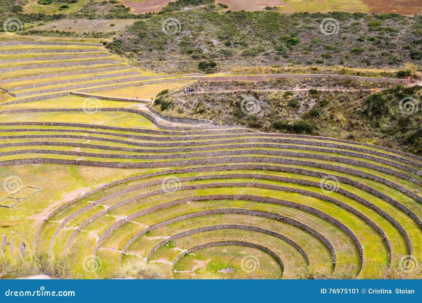 Antyczny inka kółkowi rolniczy tarasy przy mureną używać studiować skutki różni klimatyczni warunki na uprawach