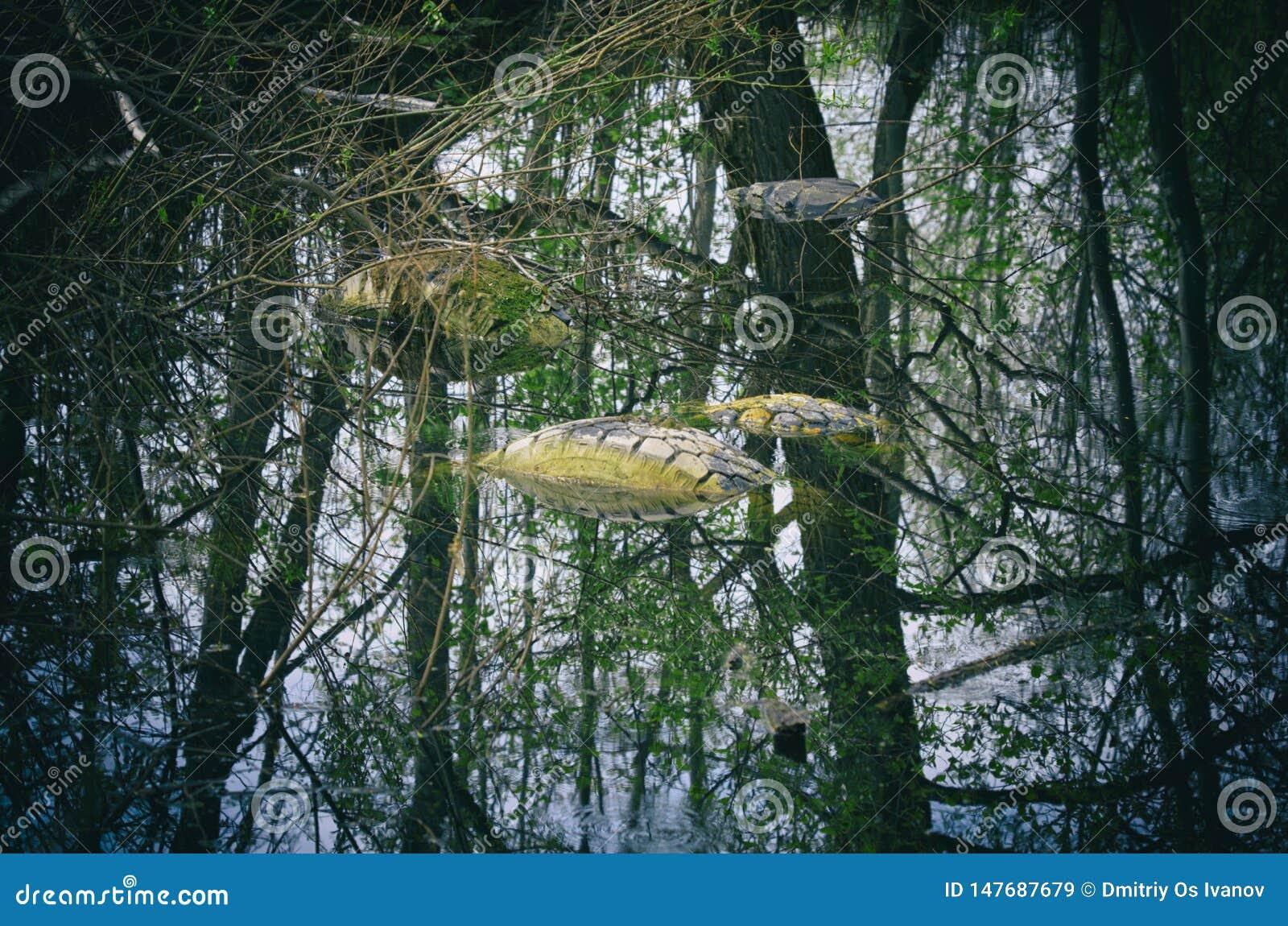 Använda gummihjul som översvämmas olagligt i ett skogdamm