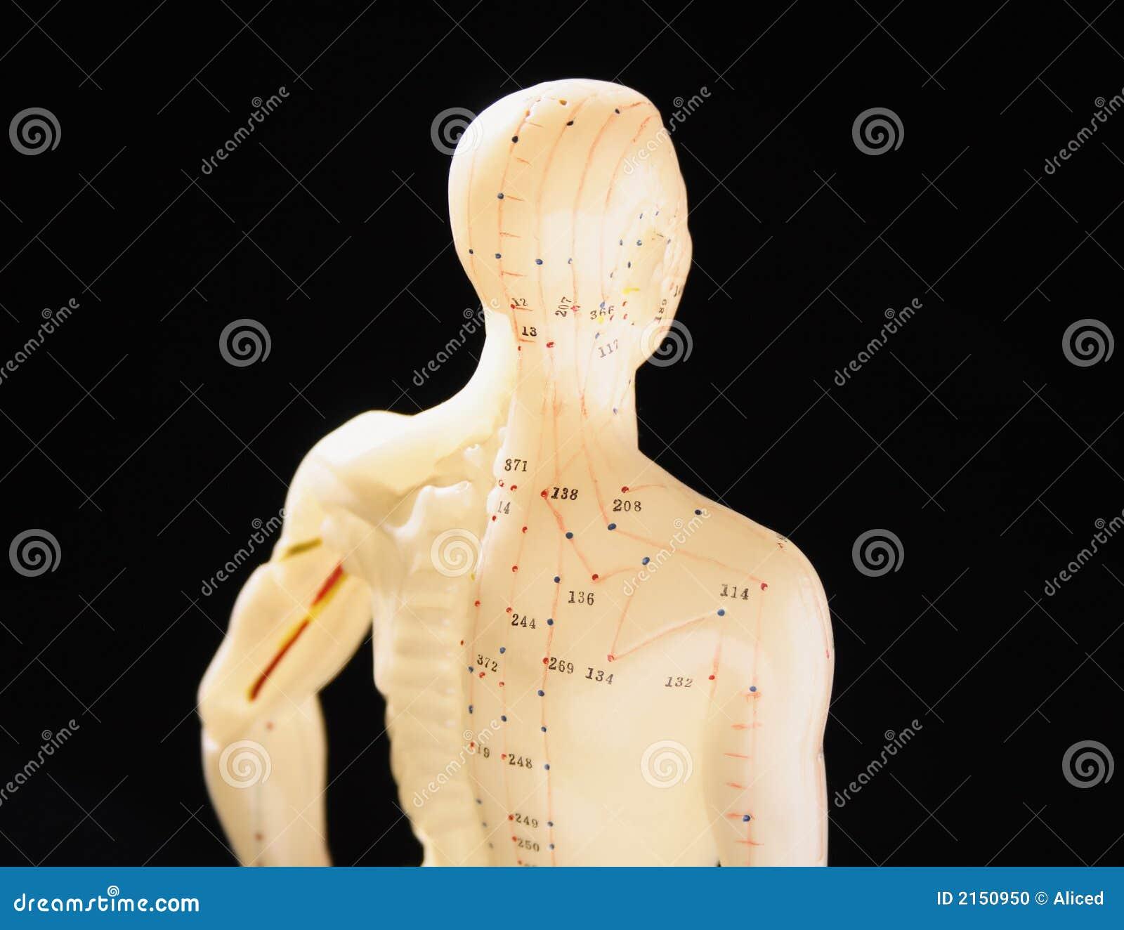 Använt diagram för akupunktur 2
