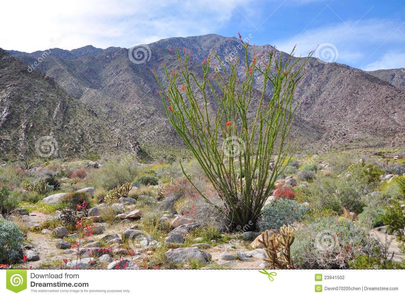 anza borrego desert state park california stock photography image