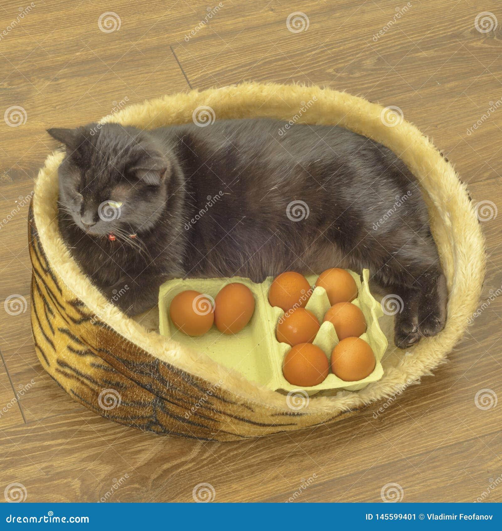 Aos ovos da páscoa precise-lhe tudo, preparam mesmo gatos gato com ovos Easter feliz
