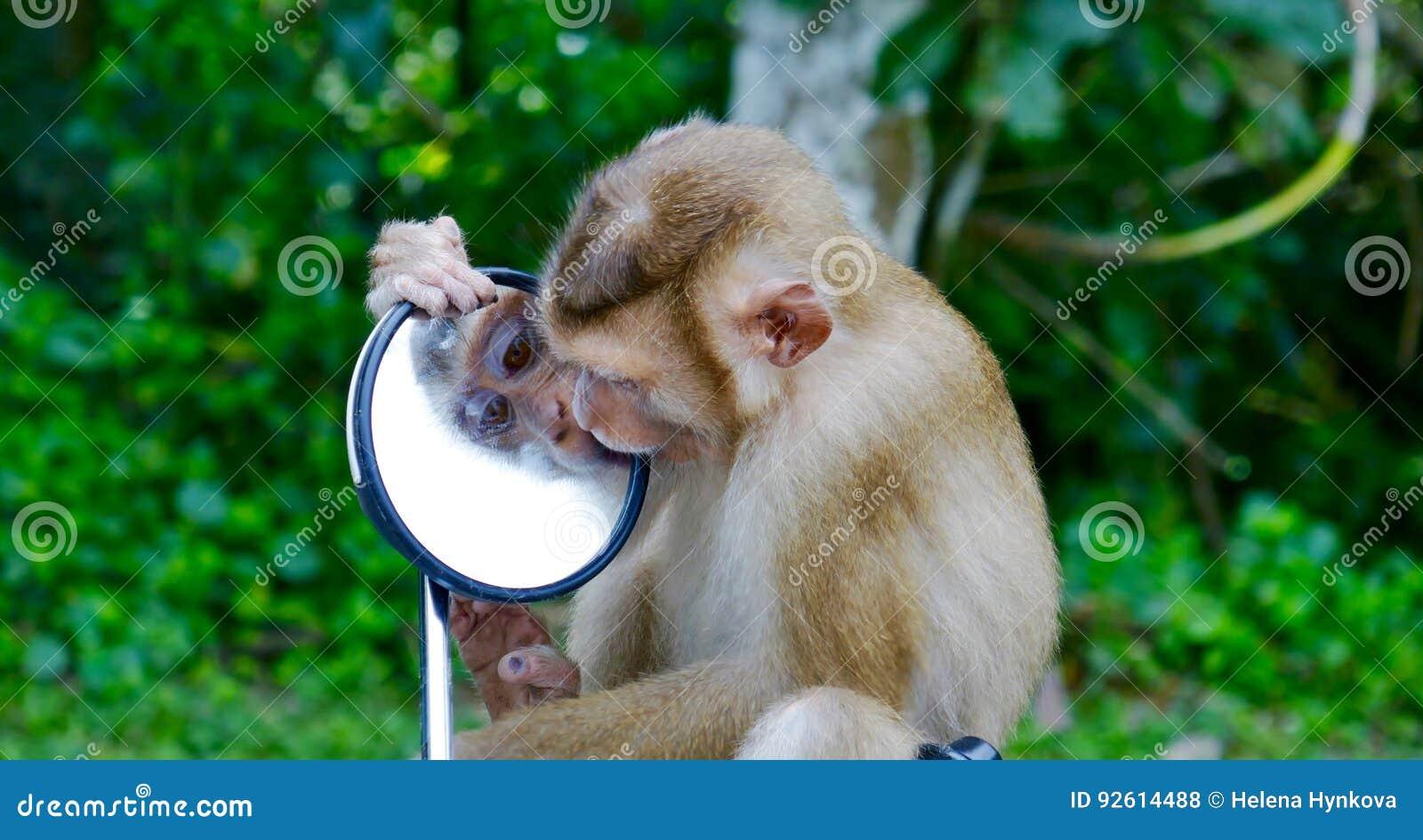 Apa - spegelframsida