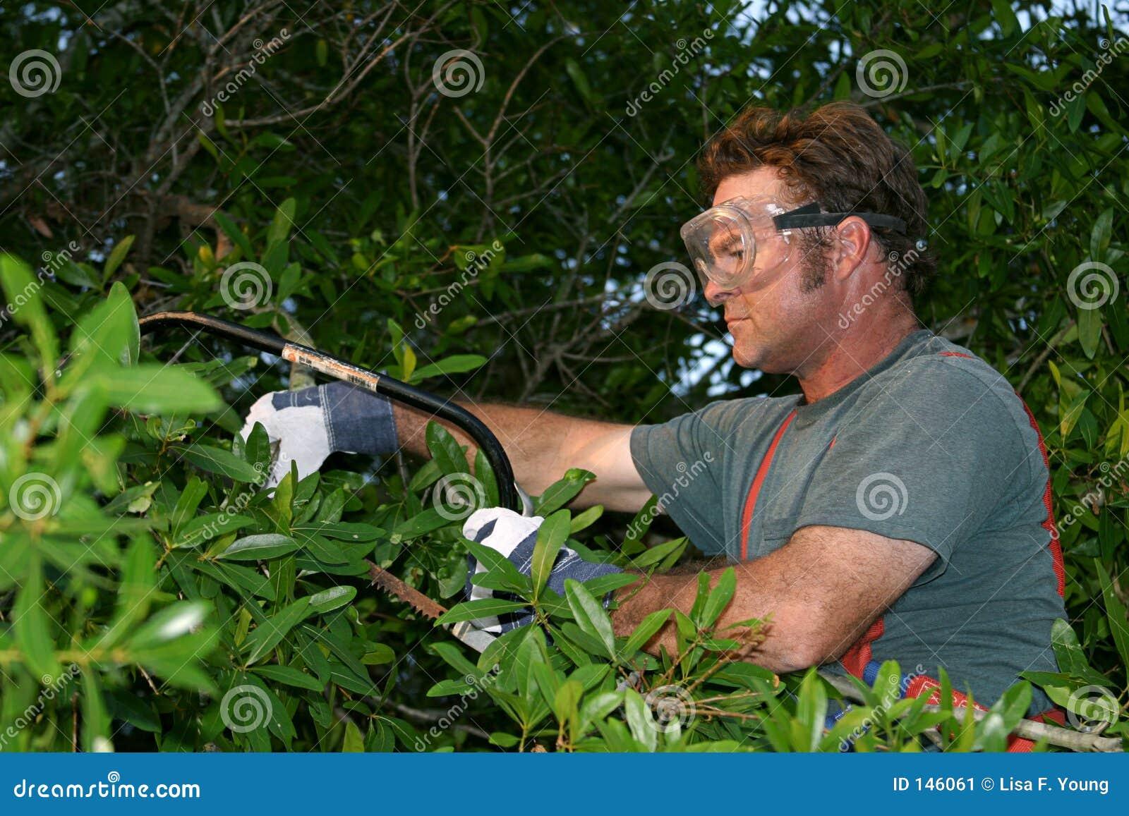 Aparando a árvore