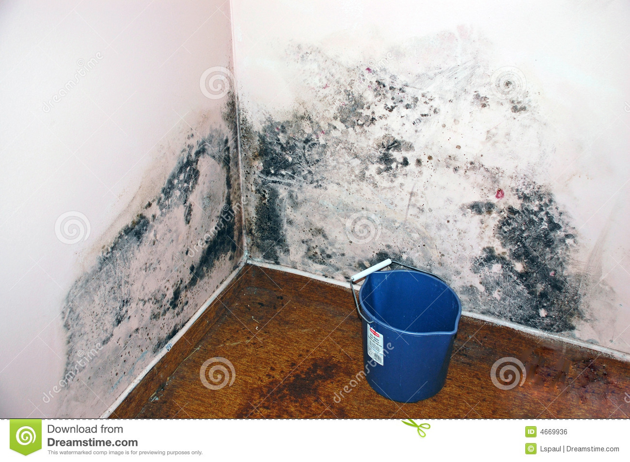 Apartment Mold Aspergillus Stock Photo Image Of Clean