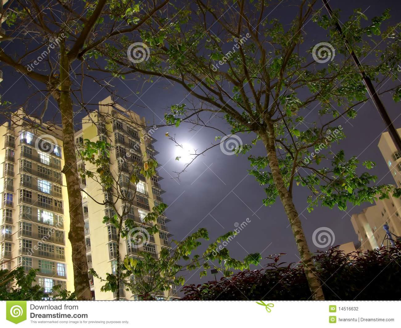 Apartment and trees with moonlight background