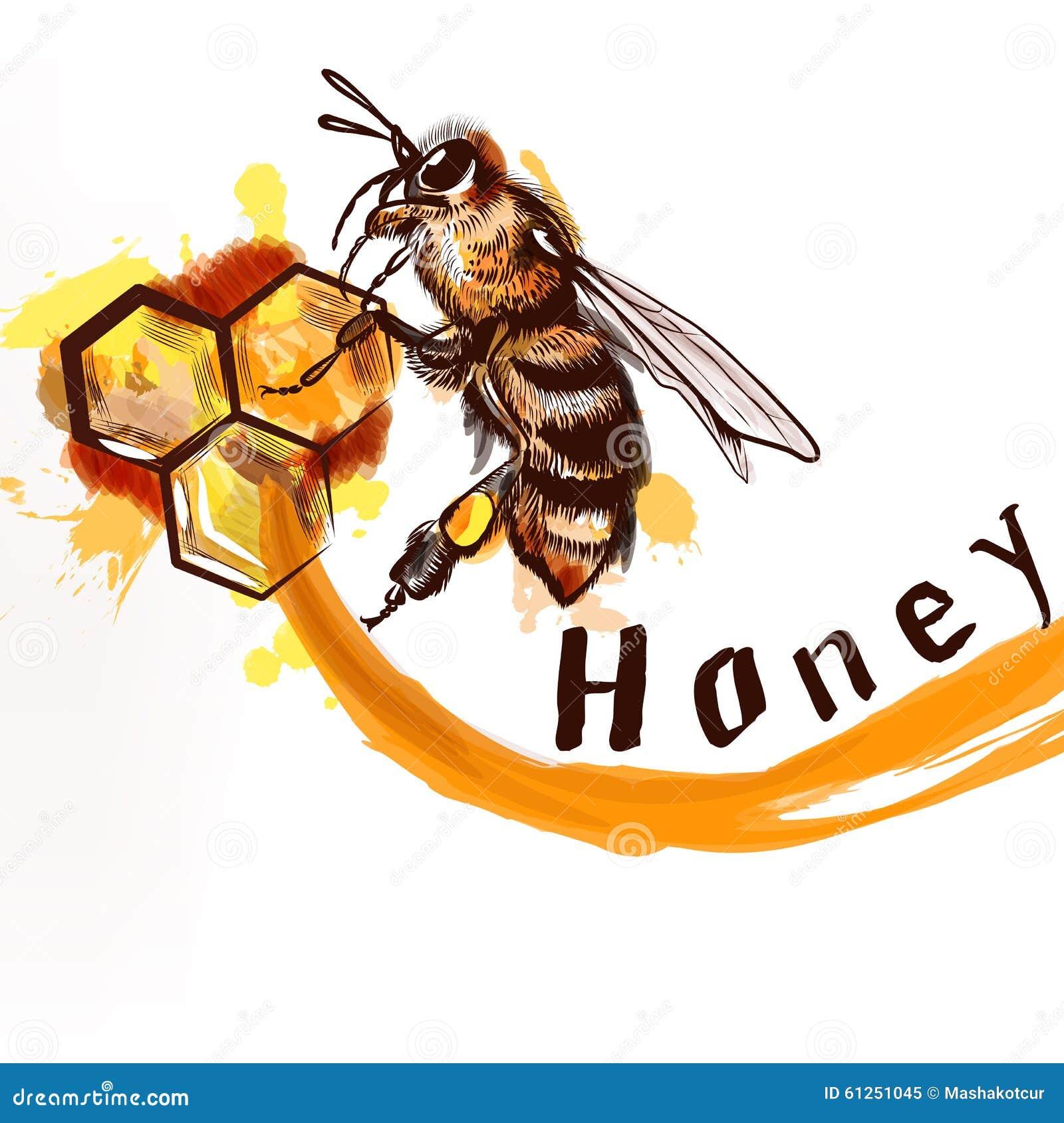 Ape dettagliata dipinta a mano che si siede su un pettine completamente del natur del miele