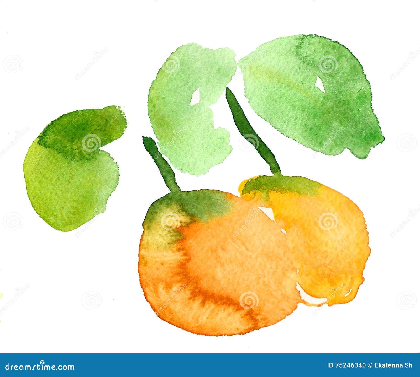 Apelsin vattenfärg