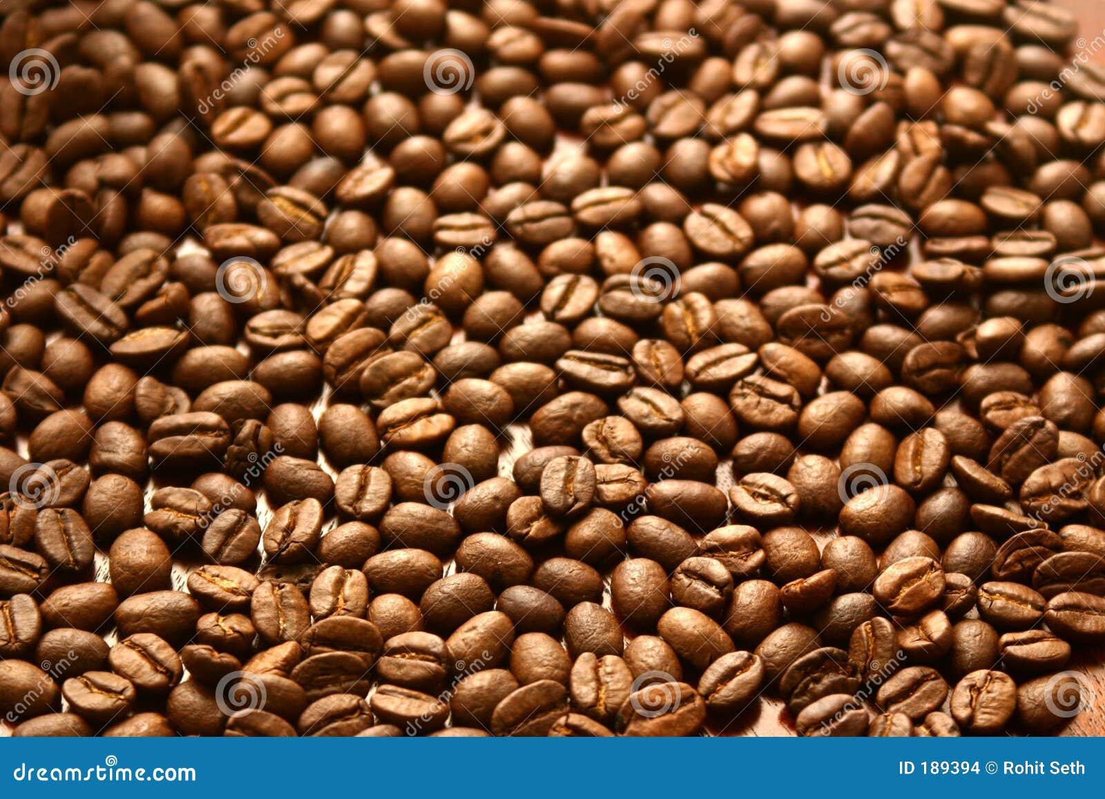 Apenas granos de café