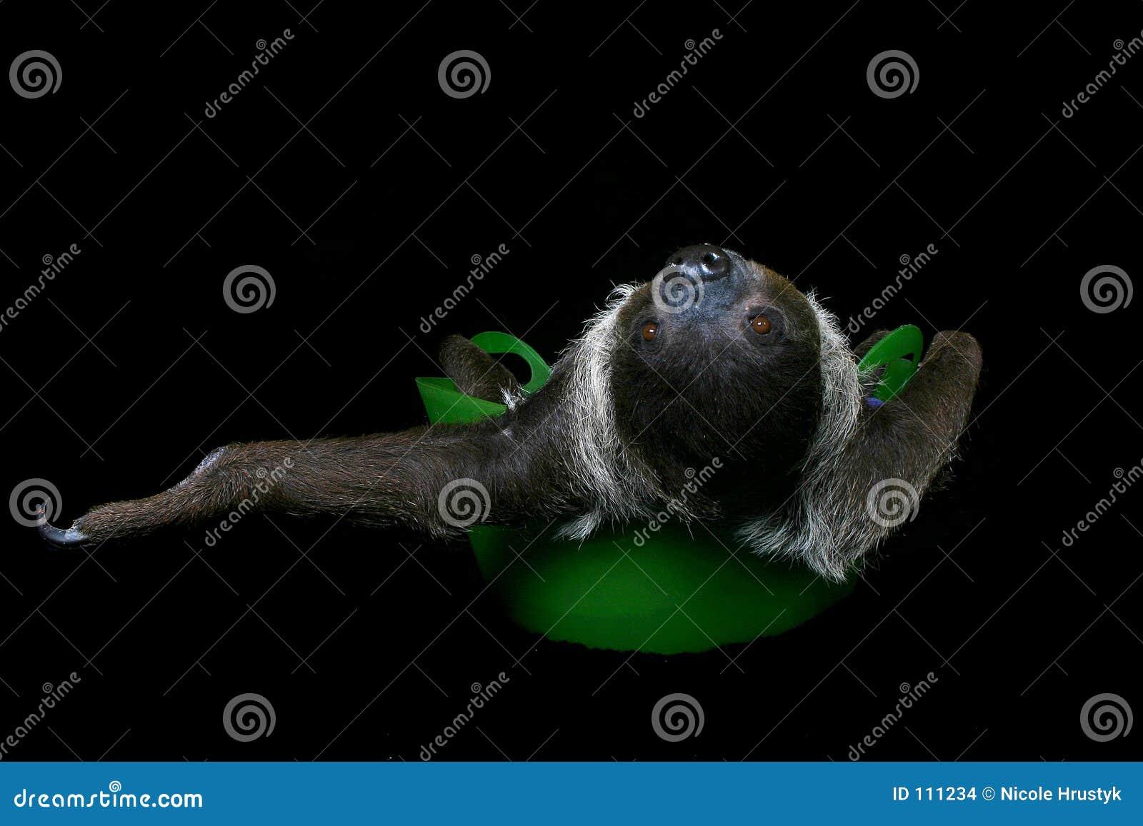 Apenas Sloth n ao redor