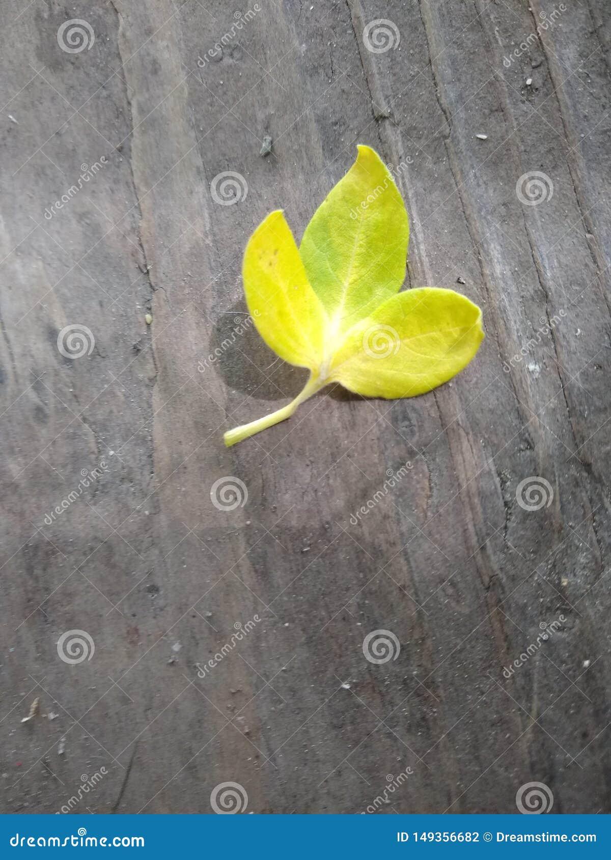 Apenas uma folha simples