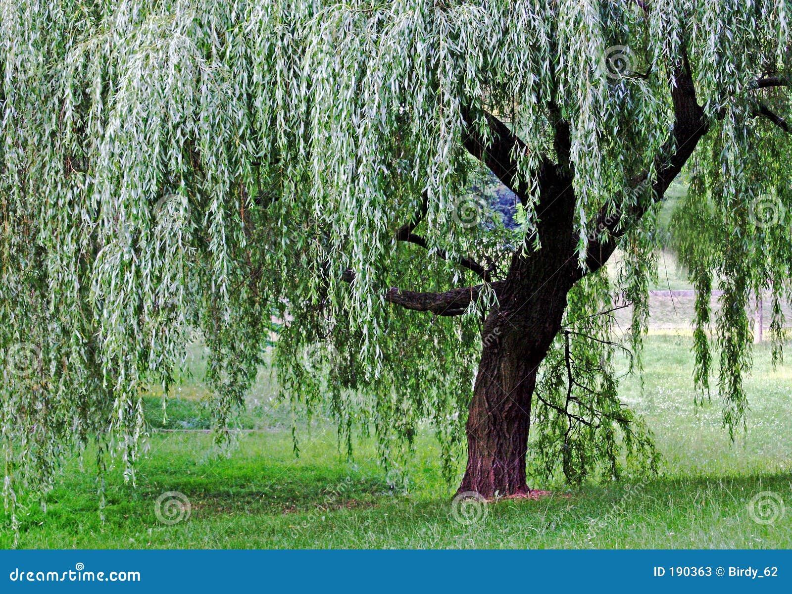 Apenas un árbol