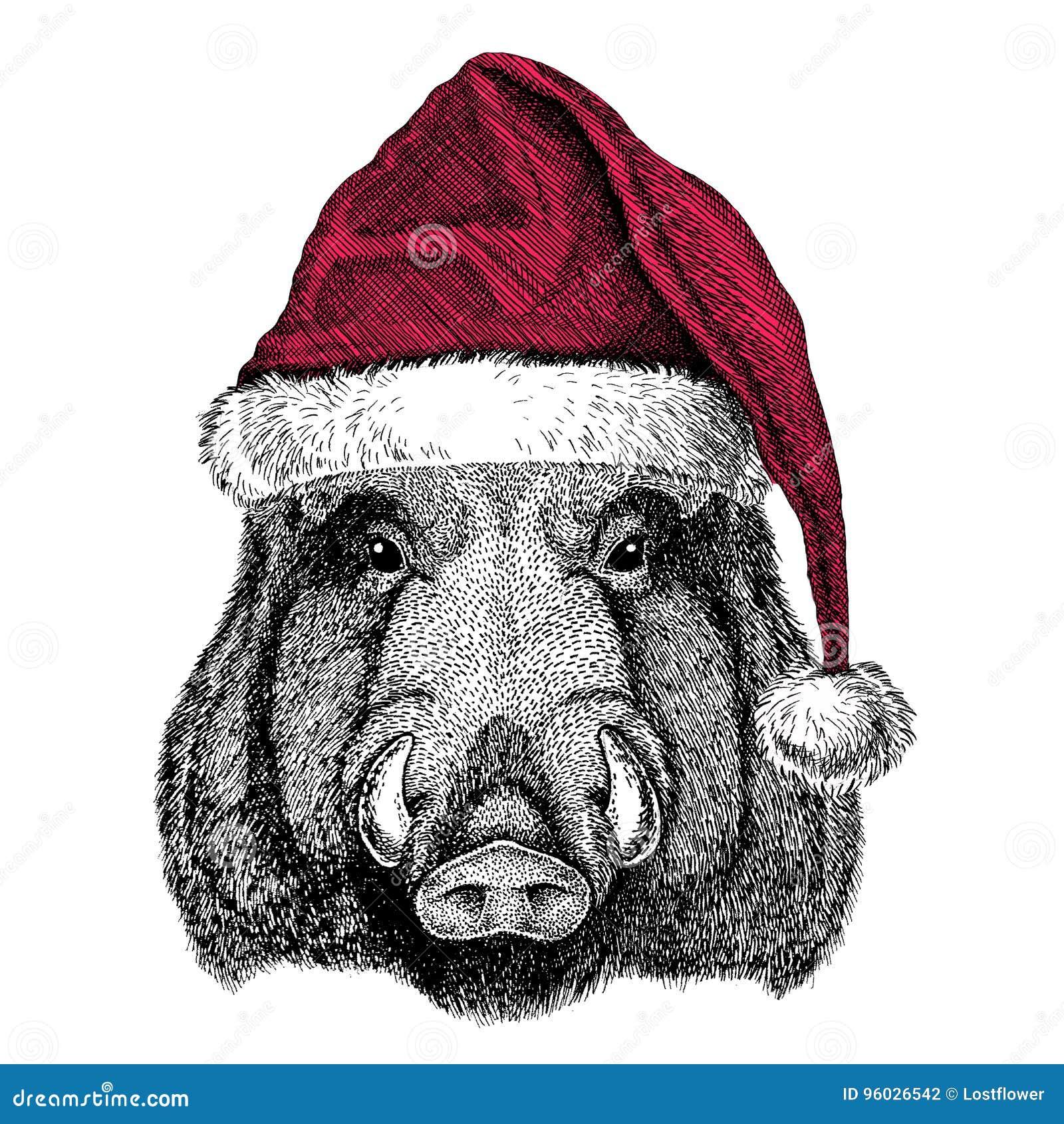 Aper, knur, wieprz, wieprz, dzikiego knura Bożenarodzeniowy ilustracyjny dzikie zwierzę jest ubranym bożego narodzenia Santa Clau