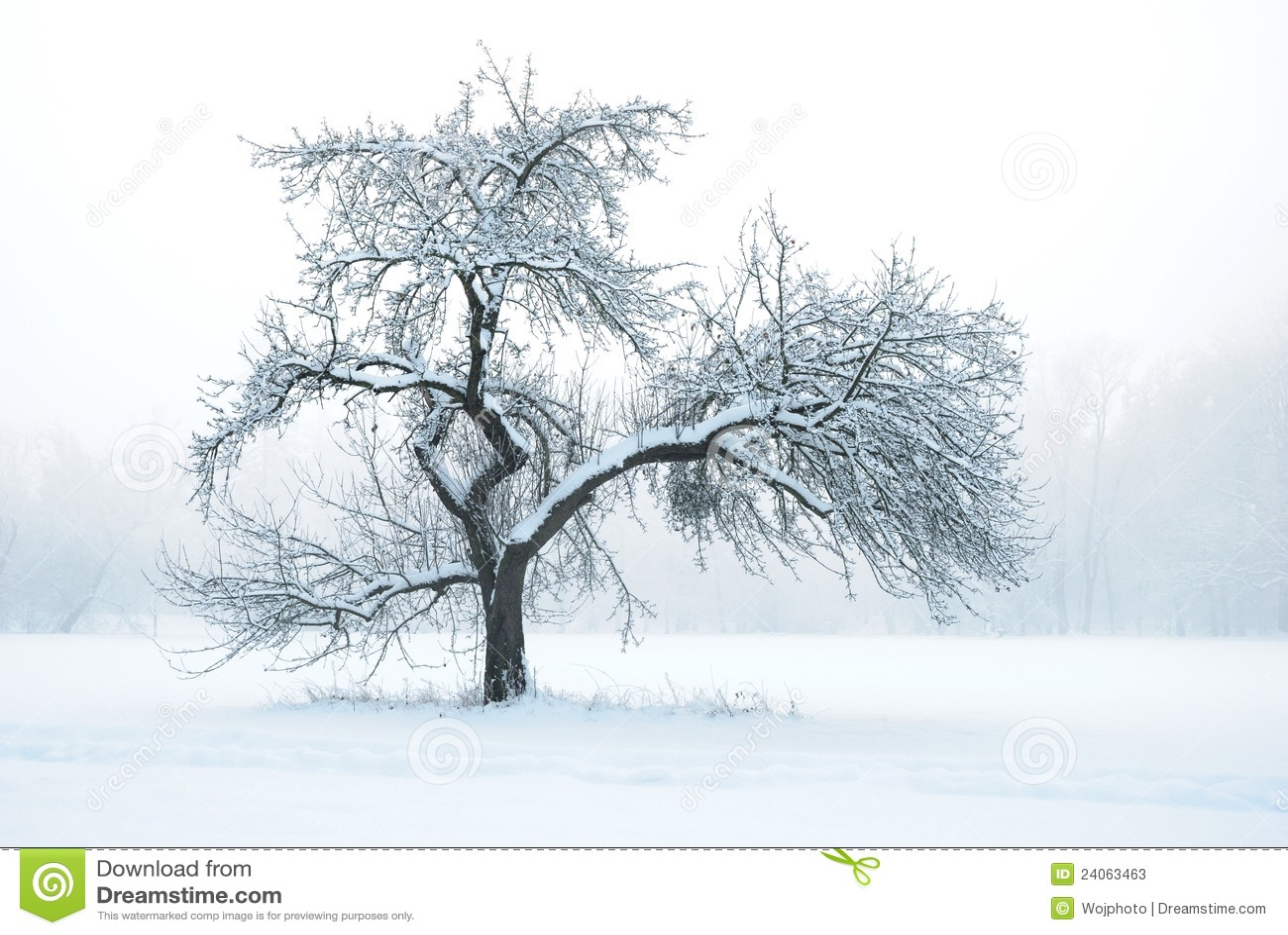 apfelbaum unter schnee im winter stockfotos bild 24063463. Black Bedroom Furniture Sets. Home Design Ideas