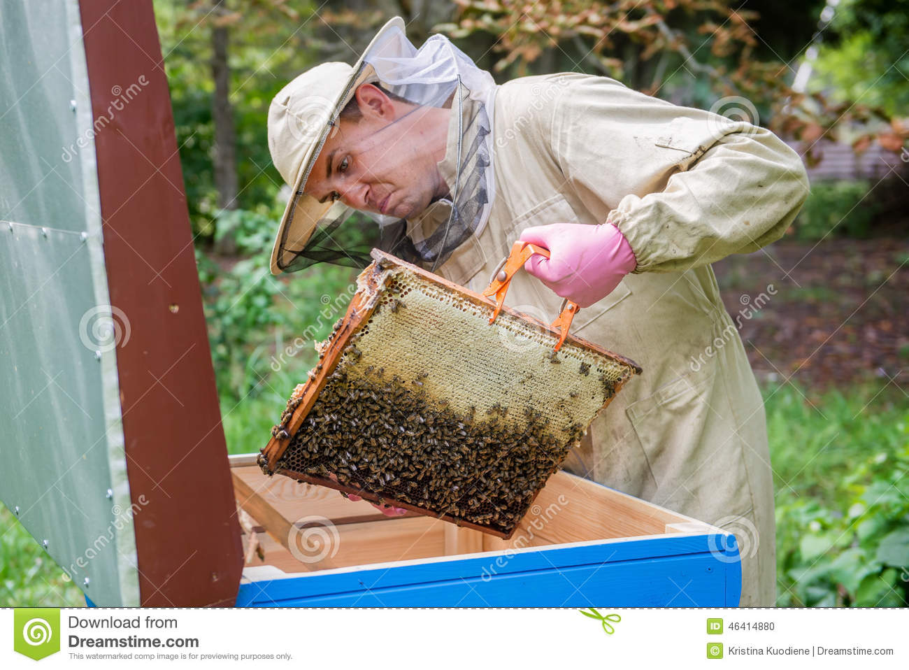 Apiarist man working in nature in summer