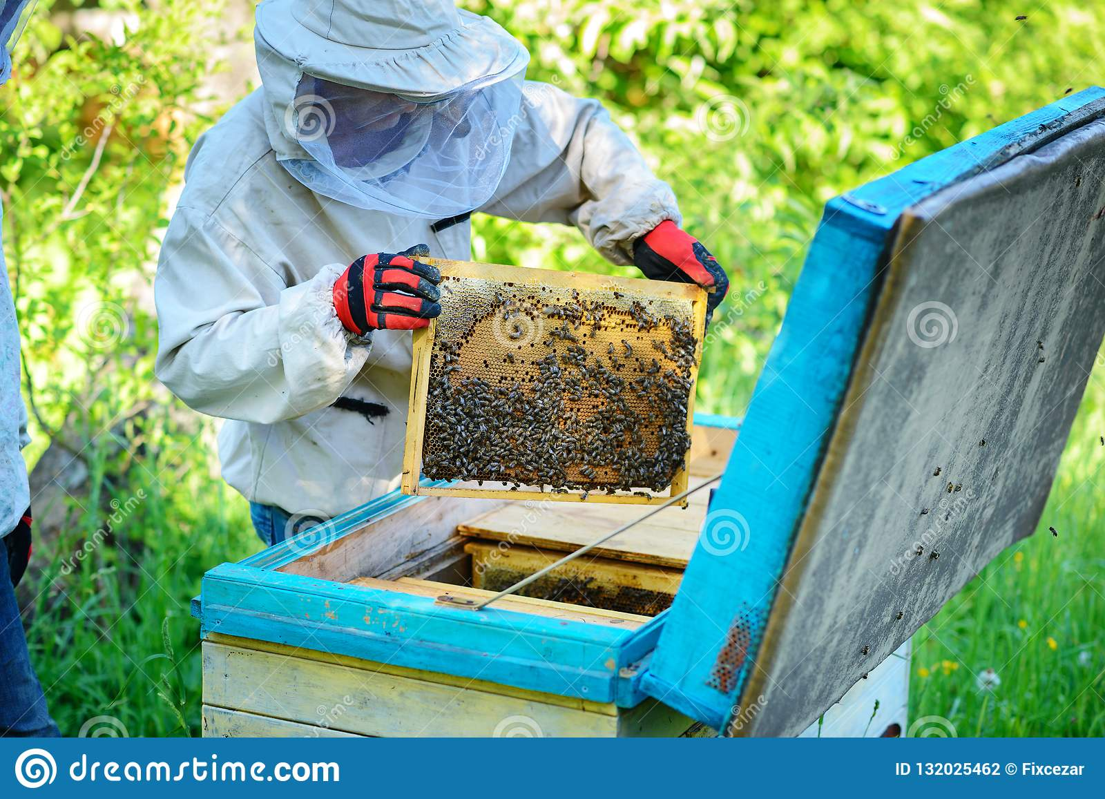apiary-beekeeper-works-bees-near-hives-1