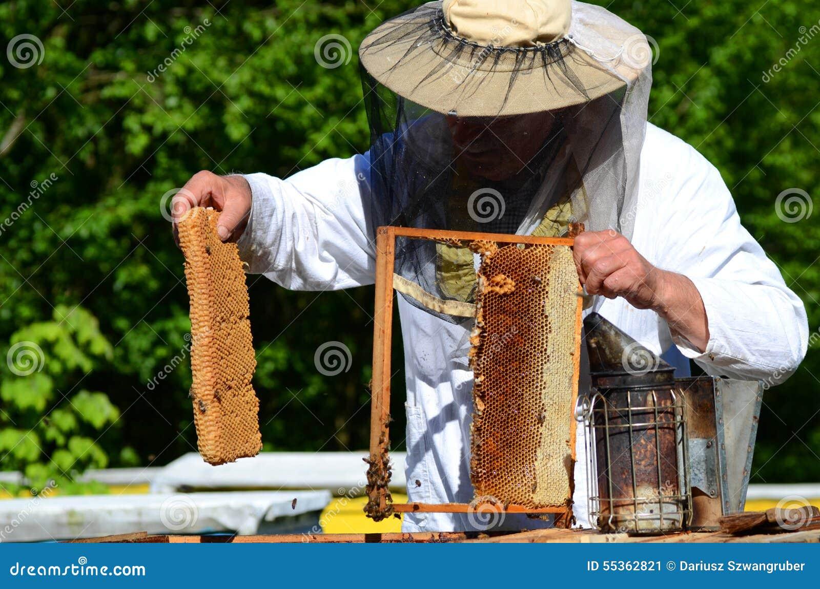 Apicoltore senior con esperienza che taglia pezzo di favo della larva in arnia