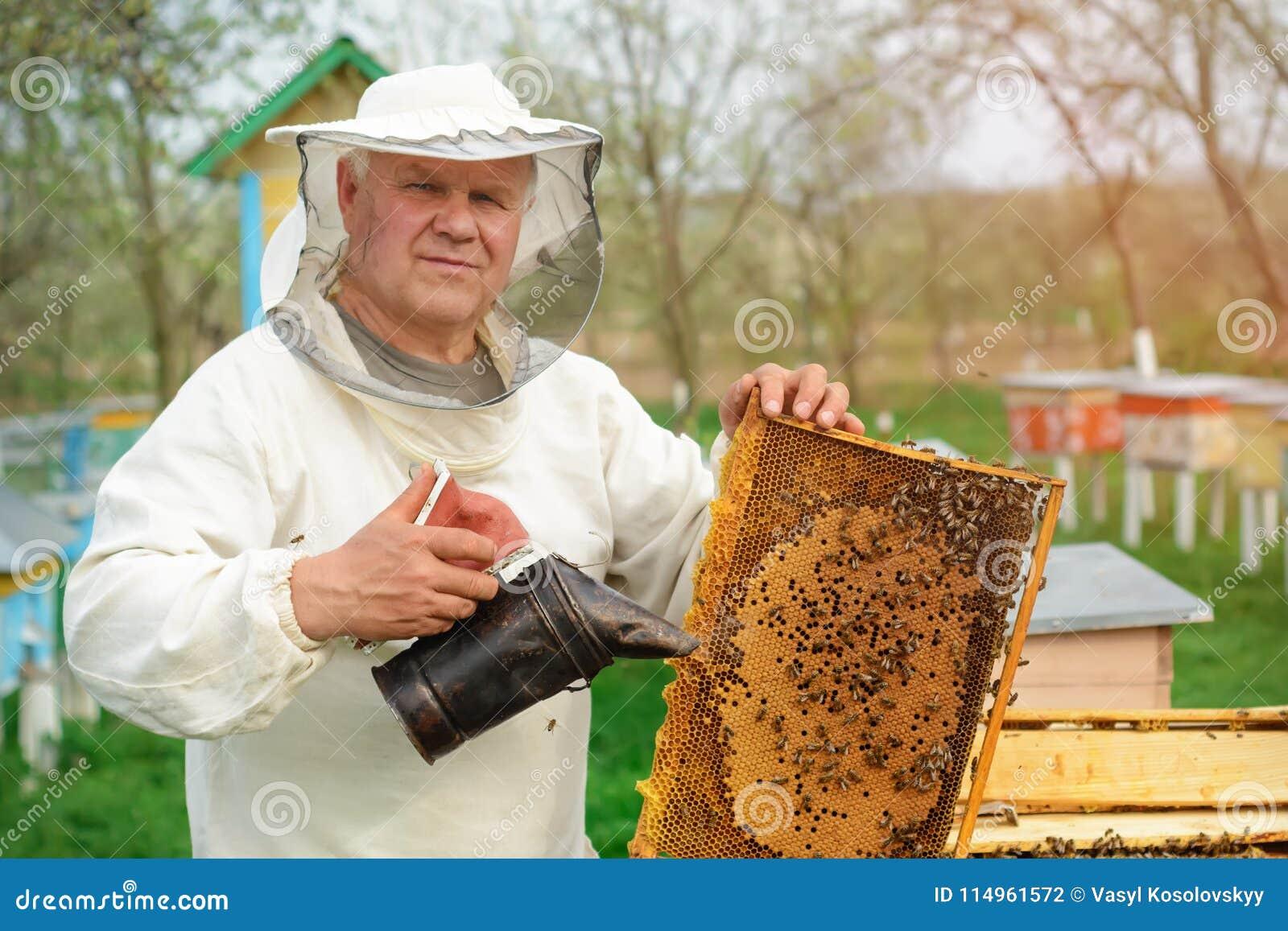 Apiculteur jugeant un nid d abeilles plein des abeilles Apiculteur dans les vêtements de travail protecteurs inspectant le cadre