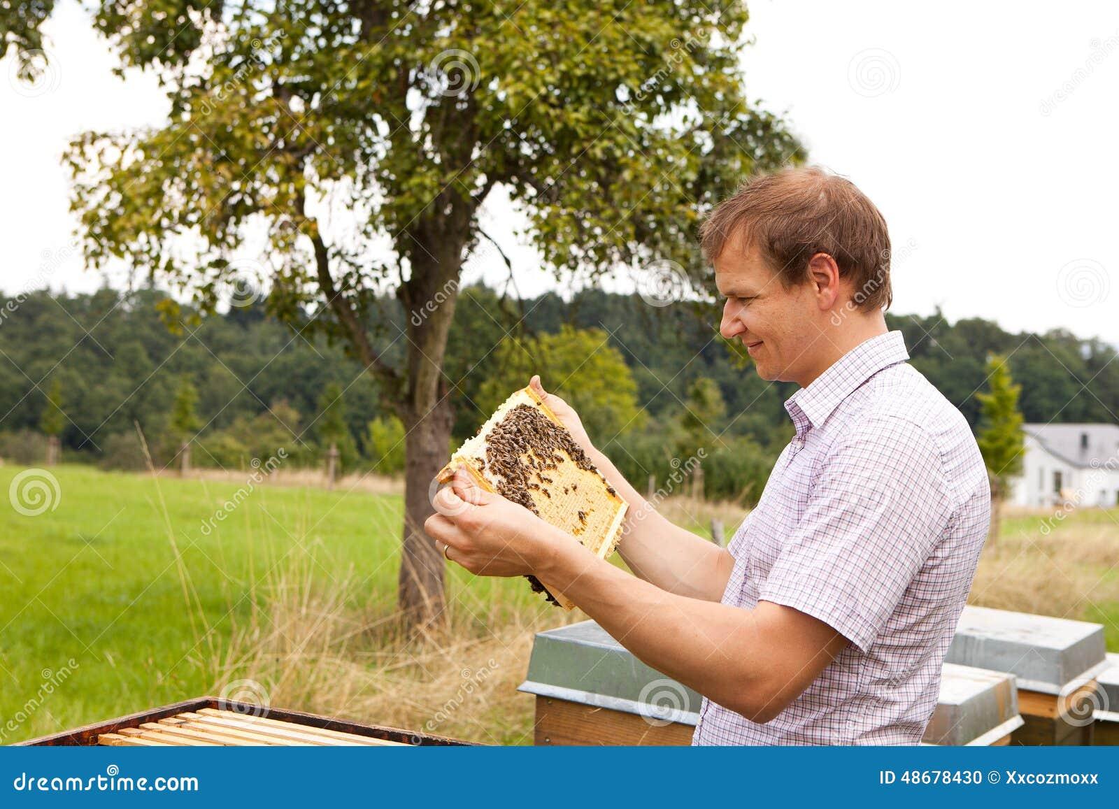 Apiculteur vérifiant un nid d abeilles