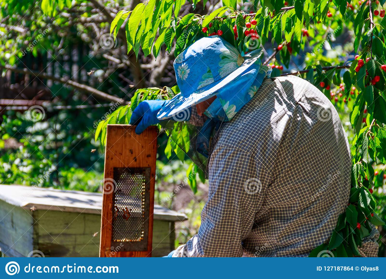 Apiculteur vérifiant une ruche pour assurer la santé de la colonie d abeille ou rassemblant le miel