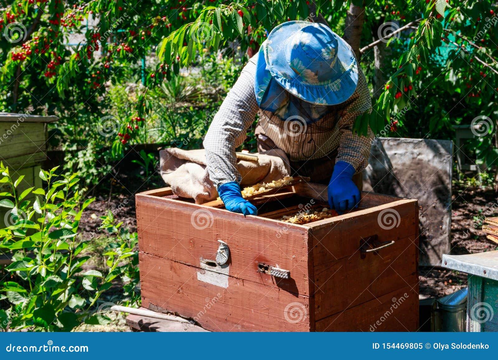 Apiculteur v?rifiant une ruche pour assurer la sant? de la colonie d abeille ou rassemblant le miel