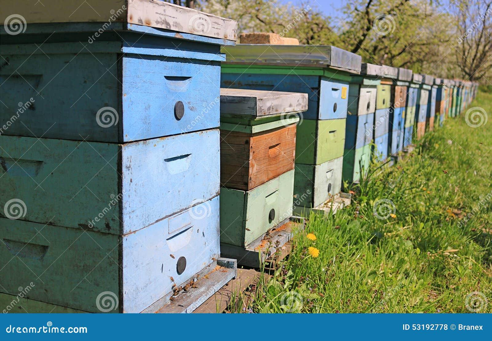 Apicultura, abejas y colmenas
