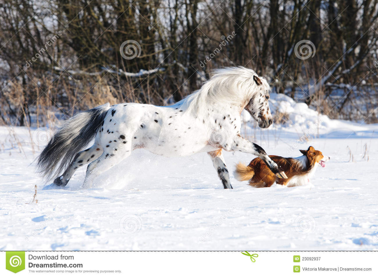 ... Runs Gallop In Winter Royalty Free Stock Photography - Image: 23092937