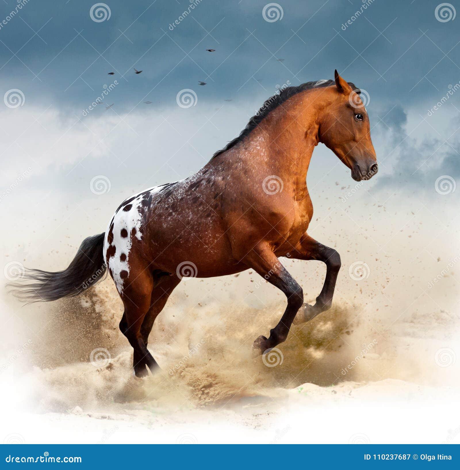 Appaloosawild paard in woestijn