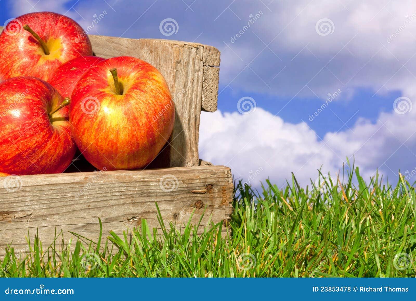 Appelen in een krat op gras met blauwe bewolkte hemel stock foto afbeelding 23853478 - Krat met appel ...