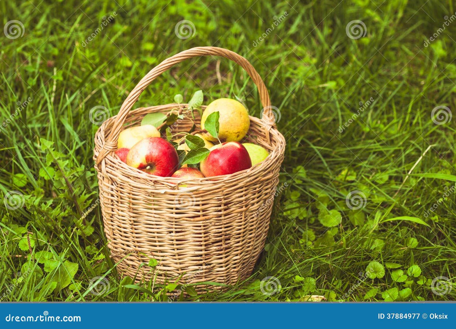 Appelen en peren op het gras
