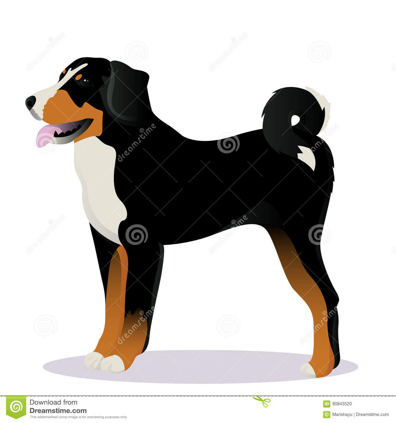 Appenzeller Sennenhund Dog Stock Illustration Illustration