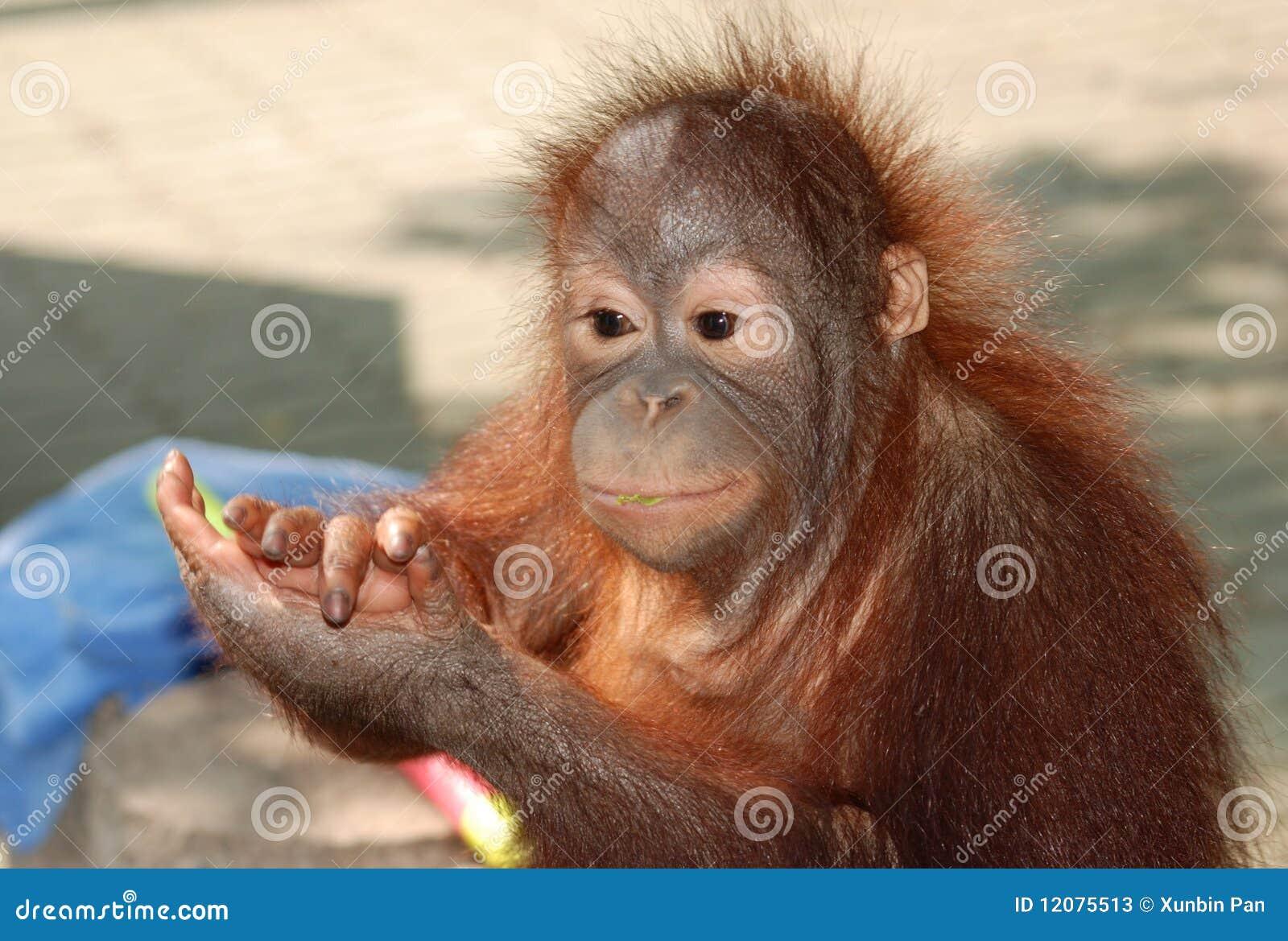 Applaudissements de singe
