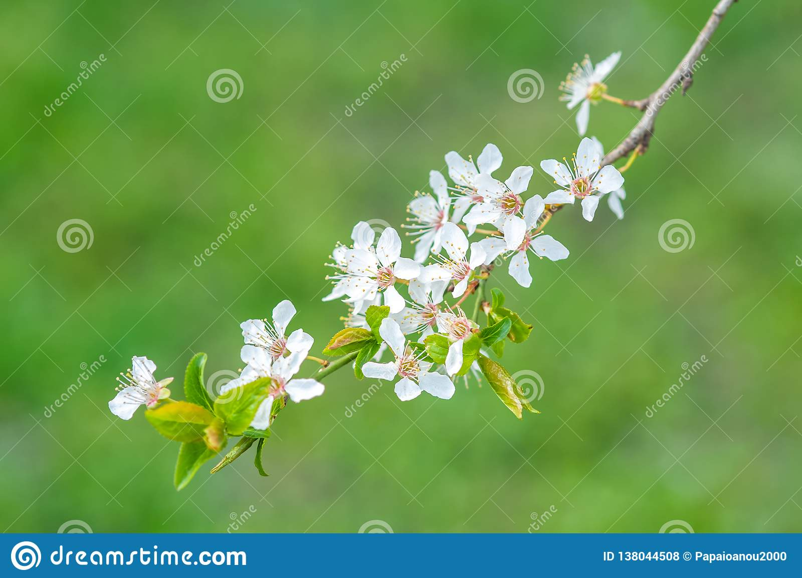 Apple τρία λουλούδια