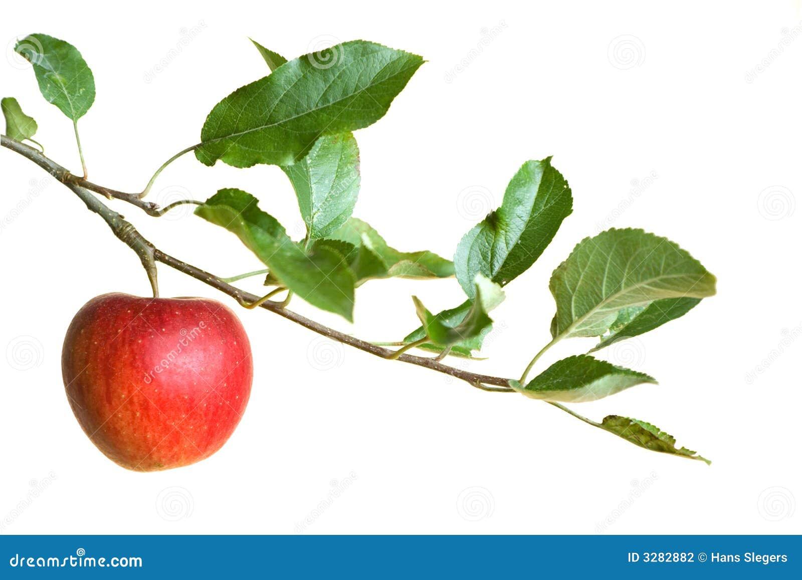 Apple auf einem Zweig