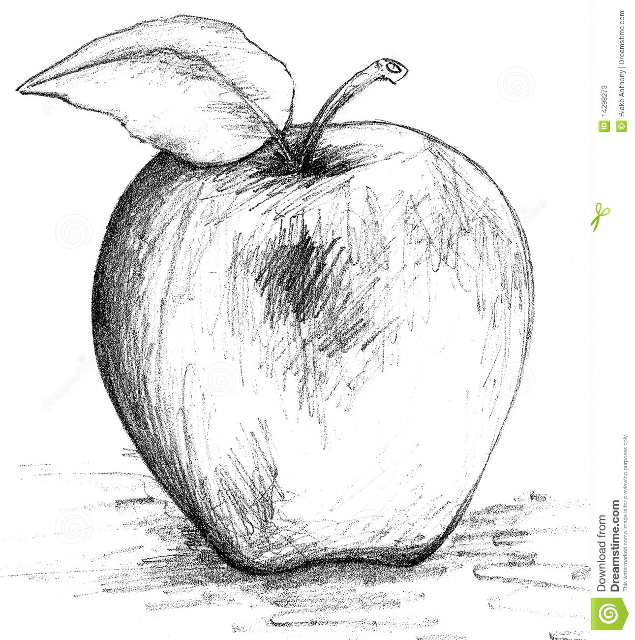 Pencil drawing sketch of an apple