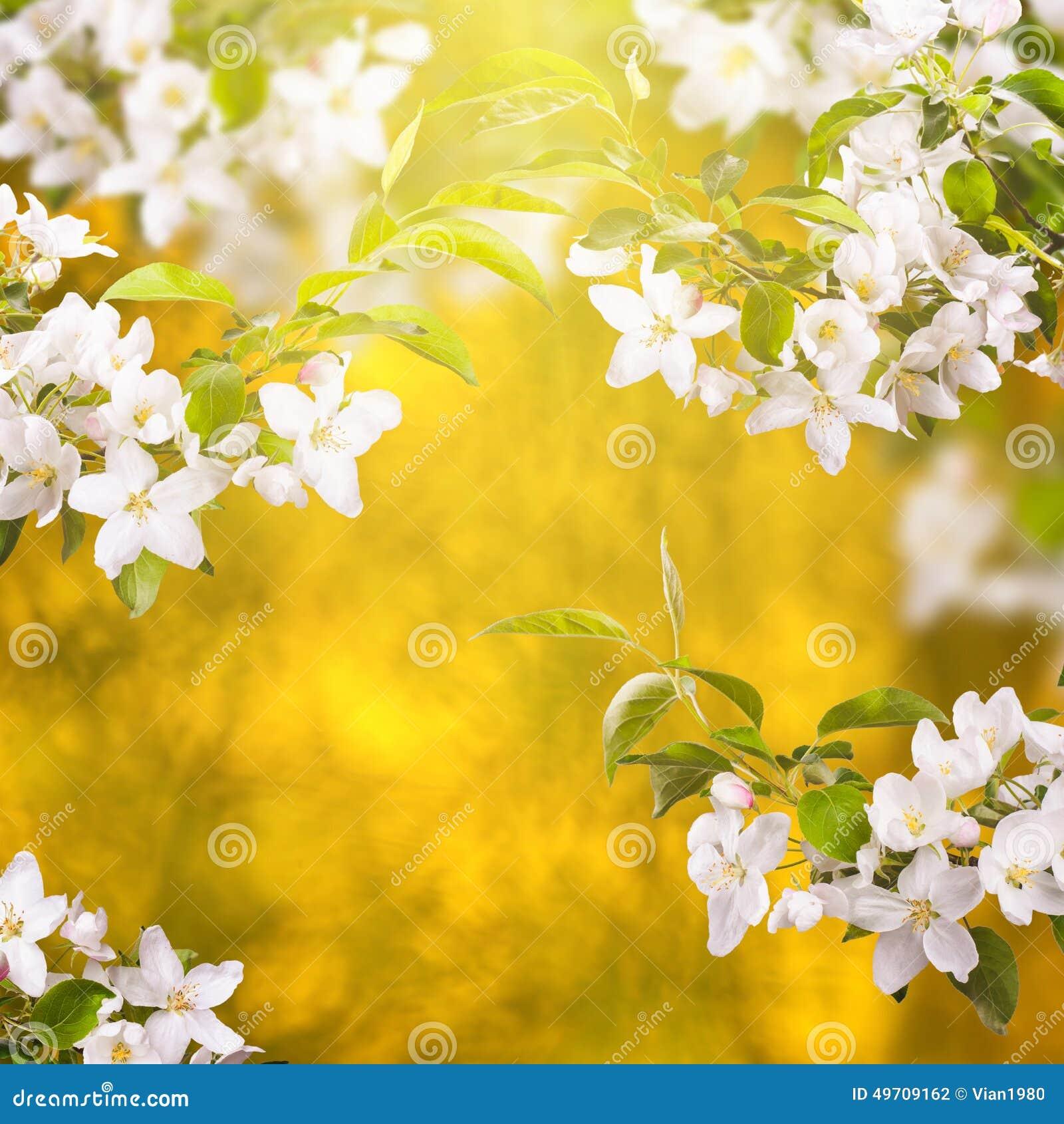 Apple blomning background_1